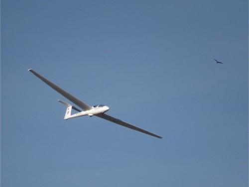 Glider - D-1721-09