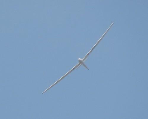 Glider - D-3653-01