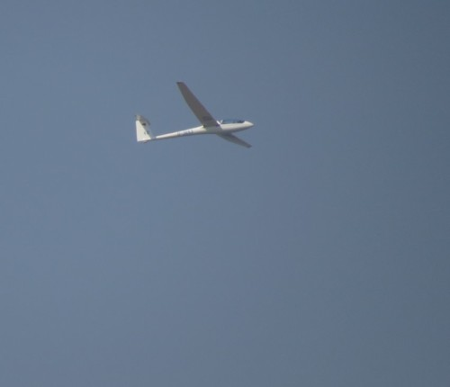 Glider - D-3653-02