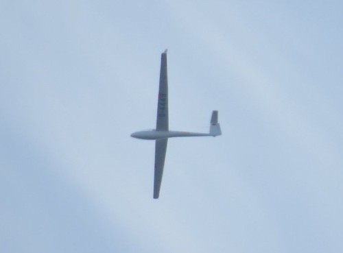 Glider - D-4449-01