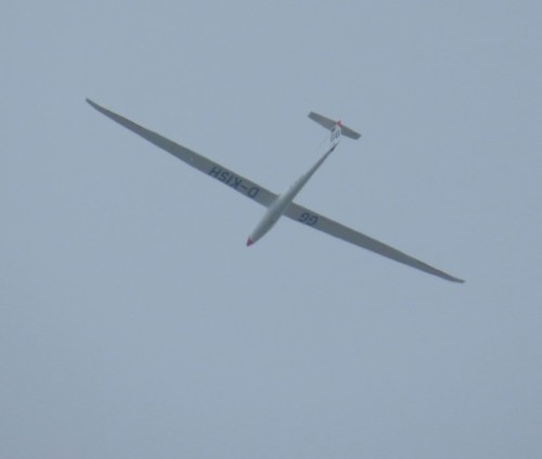 Glider - D-KISH-01