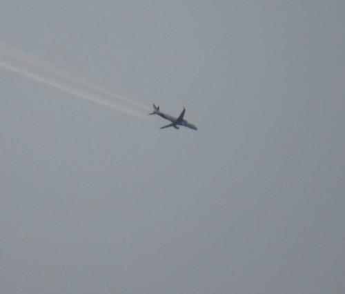 GreatDaneAirlines01
