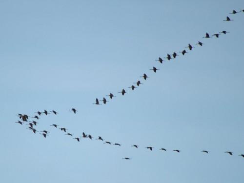 Crane004