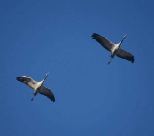Crane019
