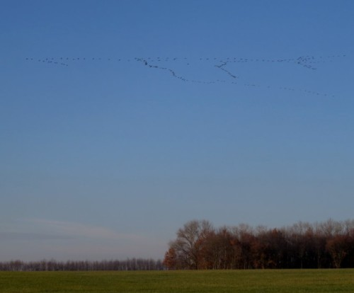 Crane020