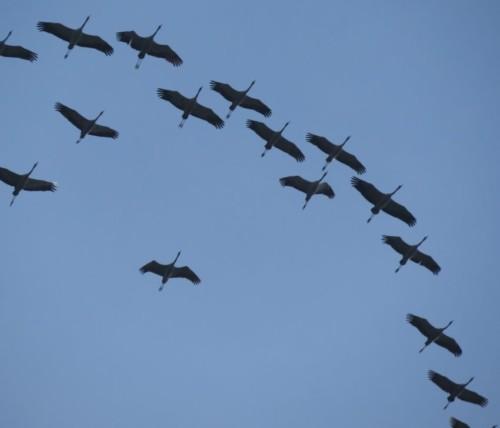 Crane022