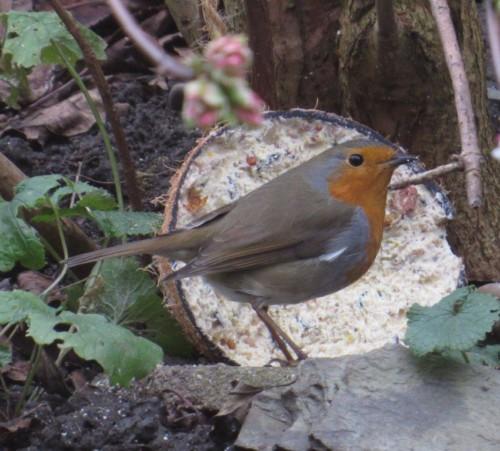 Robin012