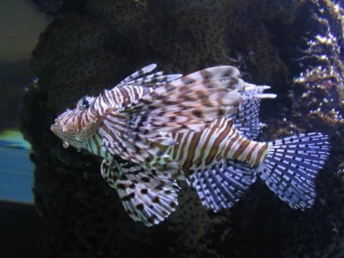 Fisch006