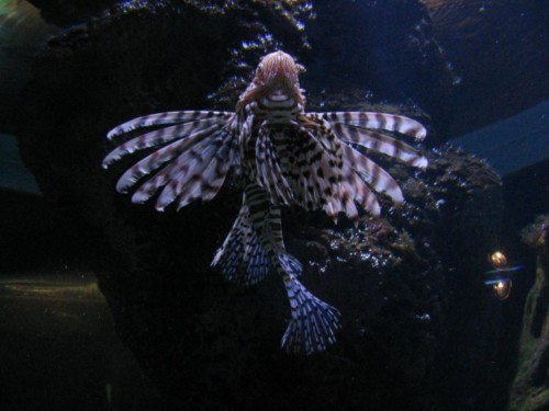 Fisch014