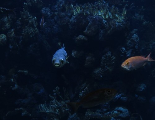 Fisch026