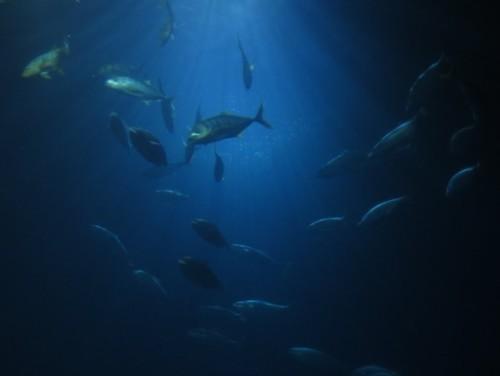 Fisch033