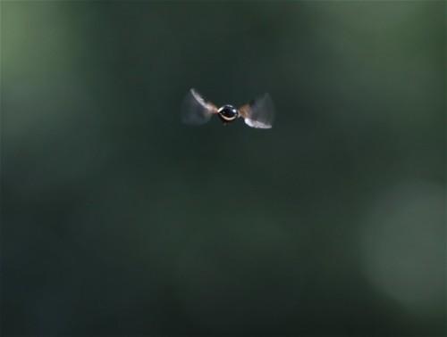 Fliege - Unbekannt-08