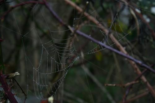 Spiderweb002