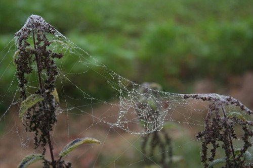 Spiderweb003