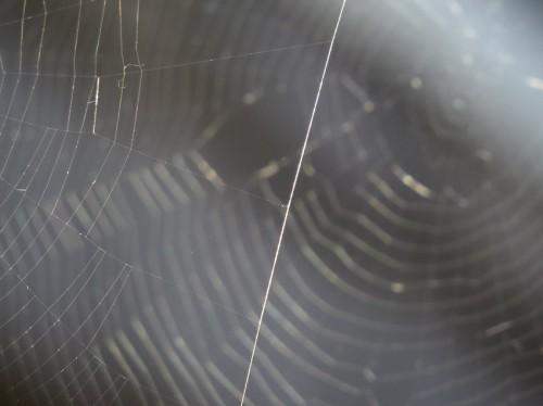 Spiderweb013