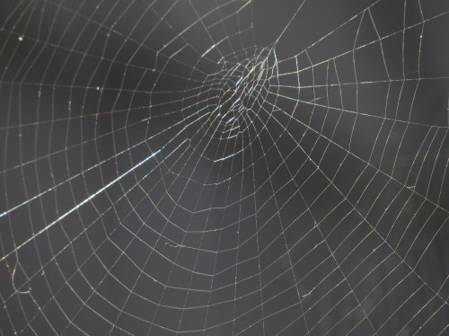 Spiderweb014