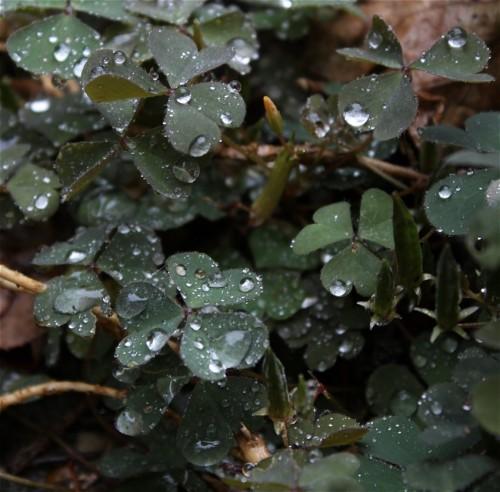 Waterdrops004
