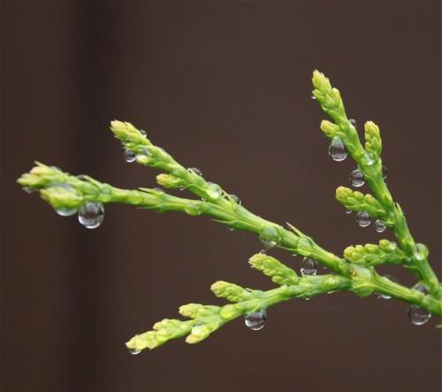 Waterdrops019