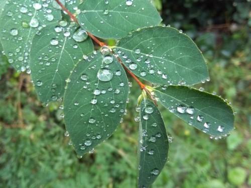 Waterdrops034