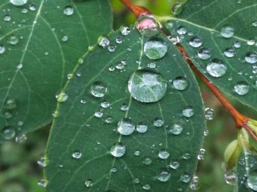Waterdrops035