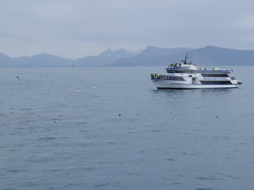 Others - Whale watching - Iceland,Special Tours - Andrea03