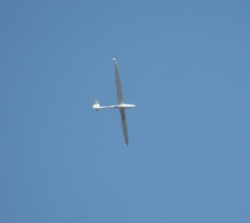 Glider - D-0202-01