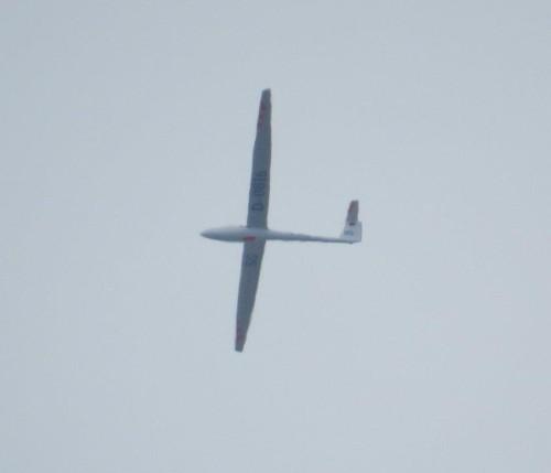 Glider - D-0816-01