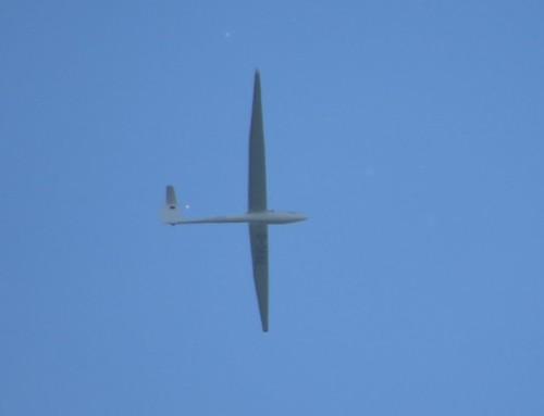Glider - D-3682-01