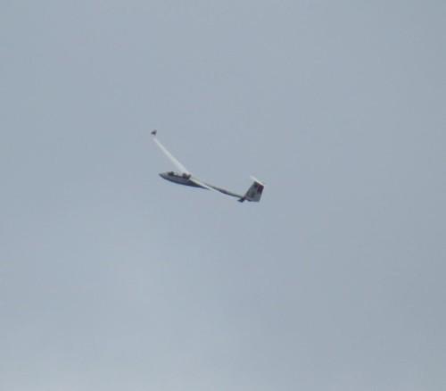 Glider - D-3976-01