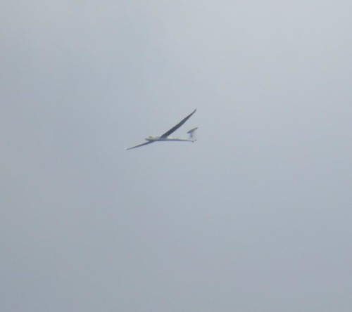 Glider - D-4872-01
