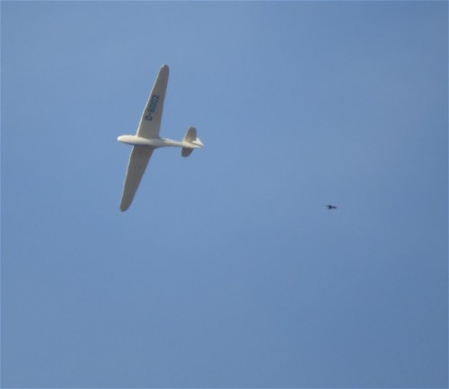 Glider - D-8002-02