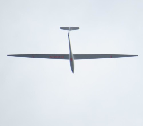 Glider - D-KACN-01