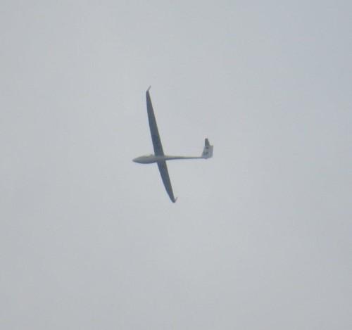 Glider - D-KPSP-01