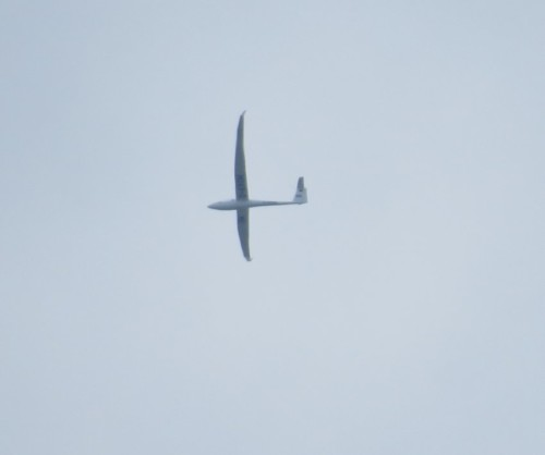 Glider - D-KROM-01