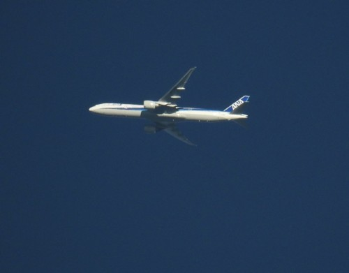 AllNipponAirways02