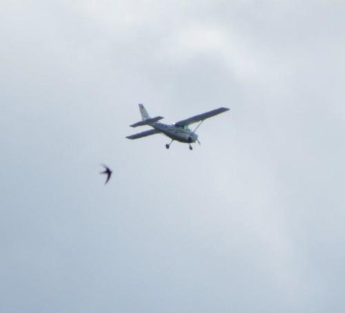 SmallAircraft - D-ERJP-02