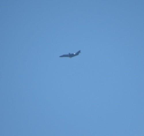 SmallAircraft - D-ISJP-01