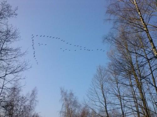 Crane010