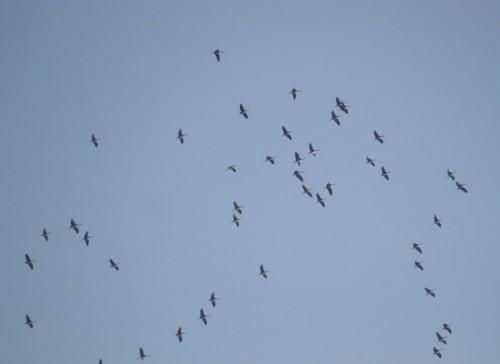 Crane011