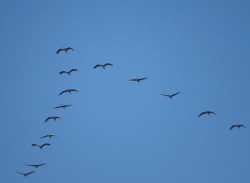 Crane021