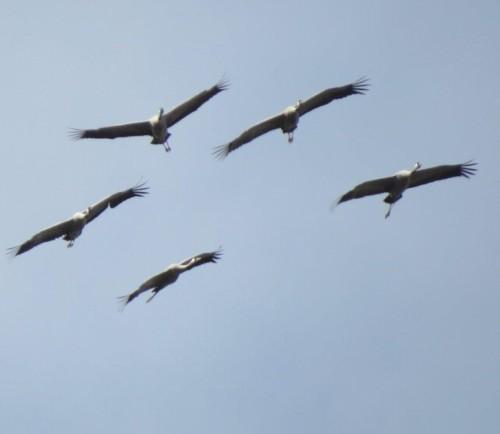 Crane035