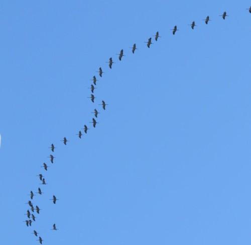 Crane040