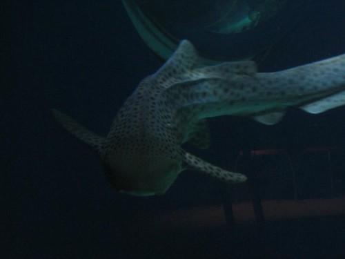 Fisch004