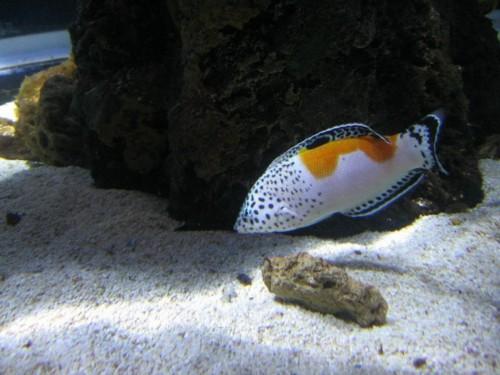 Fisch007