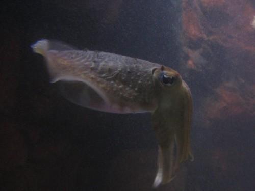 Fisch011