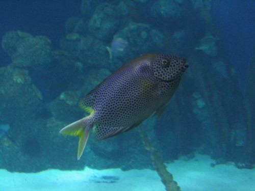 Fisch013