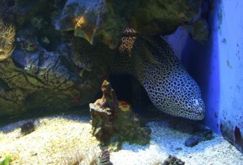 Fisch019