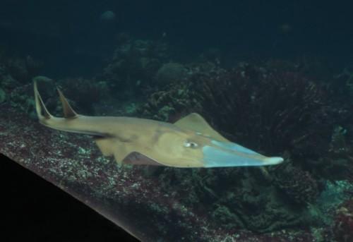 Fisch032