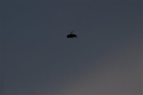 Fliege - Unbekannt-06