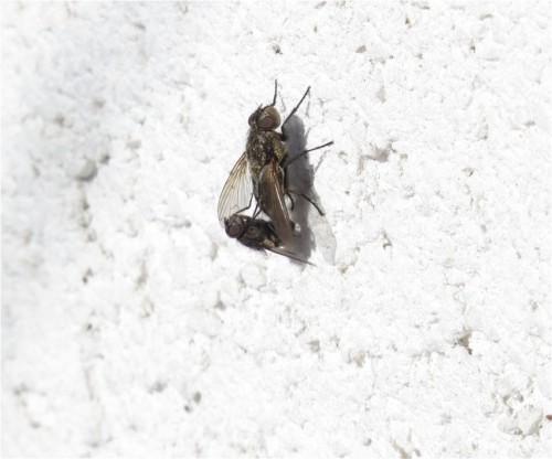 Fliege - Unbekannt-09